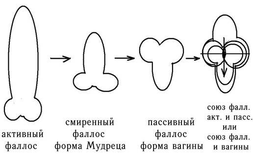 как формируется вагина